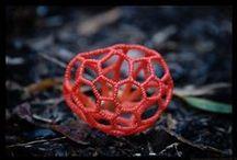 Plants and Fungi / by Laurel Schmitz