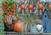 My Fall Garden...