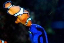 Aquarium.Fishes / by showBOO K