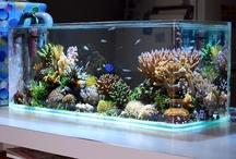 Aquarium.Fish Tank / by showBOO K