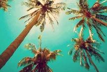Summer / by Yasmin Melo