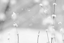 Seasons.Winter / by showBOO K