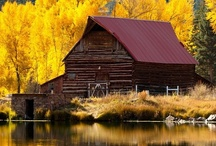 I love fall! / by Kathy Long
