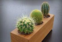 Gardening.Cactus / by showBOO K