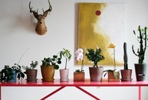 Gardening.Indoor / by showBOO K