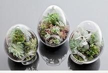 Gardening.Terrarium / by showBOO K