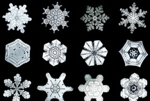 Snowflakes / by GlavasAdopt