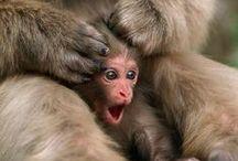 "Funny Monkeys / Never underestimate the importance of ""monkeying around."" / by Monkey Bar Storage"