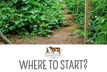 Starting A Homestead / All the best tips for starting a homestead for beginners. Homestead where you are, on a budget, layouts, homesteading skills, learn to homestead, starting a small farm, livestock care, raising chickens, goats, ducks, cows, gardening, self reliance, and more!