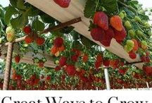 Gardening / All the best gardening tips and hacks for beginners and seasoned gardeners alike. If you grow your own food, or you simply enjoy growing flowers, vegetables, or fruit for fun, you'll find it all on this board. Vegetable Garden | Backyard | Small Farm | DIY Natural Pesticides