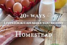 Earning Money as a Homesteader