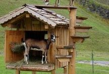 Goats / Helpful articles and tips for raising goats.