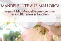 FRÜHJAHRS-REISEN - Die schönsten Trips und Erlebnisse zwischen März und Juni / Zur Mandelblüte nach Mallorca oder in die Pfalz? Spargeltouren am heimischen Niederrhein und im dänischen Odsherred? Hier findet ihr die intensivsten Genüsse, die das Frühjahr Reisenden zu bieten hat. Mitpinnende Reiseblogger sind herzlich willkommen!! Einfach dem Board folgen und mich anschreiben. (bitte nur hochformatige, deutschsprachige Pins)