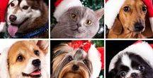 Homemade Holiday Pet Treats / Easy to follow holiday treats for Pets recipes.