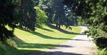 Favorite Dog Friendly Parks and Activities / Favorite Dog Friendly Parks and Activities