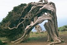 trees / by Maleka Fruean