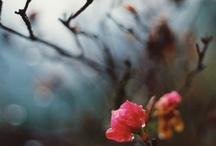 Photography / by Alaina Polaski
