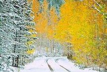 Winter / by Sonja Philip