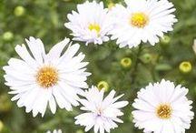 Bloomin' Beautiful! / Nature's beautiful flowers