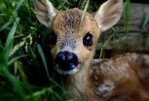 Cute Animals / by Rachel Miller