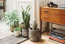 bloom where you are planted / House plants, indoor vignettes.
