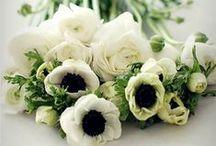 BLOOMS / A board of beautiful, breathtaking blooms! #Flowers #Bouquets  | #weddingplanner #coordinatedforyou #weddings