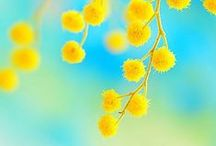 INSPIRATION: The Color Yellow