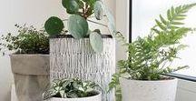 Planten | Botanical