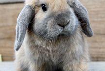 bunnies ❤️