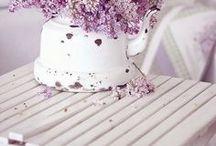Purple Wedding / Hochzeitsdeko in Lila - Alles für deine Hochzeit in der Farbe Lila.  ❤http://www.weddix.de/hochzeitsshop/farbwelten/hochzeitsdeko-in-lila.html