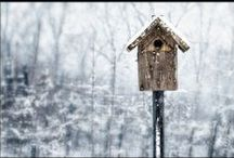 My Art: Winter / A collection of fine art photography depicting scenes of warmth in the cold of winter.