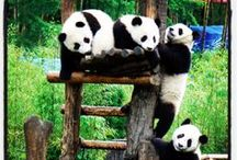 Animals of China / China is home to some of the most wonderful creatures on the planet...let's celebrate them! / by WildChina