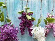 Lilac Wedding / Hochzeit in Flieder - Hochzeitsdeko und Papeterie in Flieder liegt diese Saison voll im Trend! Bei uns findet ihr jede Menge schöne Accessoires und Inspirationen für eure Traumhochzeit ❤