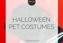 Halloween Pet Costumes / What is more awesome than Halloween and pets? Pets in Halloween costumes!