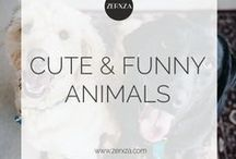 Cute and Funny Animal Pictures / Who doesn't love animals?! This board features ALL cute animals and often some funny four-legged cuties.