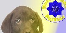 Most Valuable Partner- Service Dogs / Most Valuable Partner M.V.P is a premier service dog provider and doggy enthusiast organization  tag us with your pup and follow us for everything dog to service dog mostvaluablepartner.org