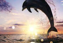 Delfini favolosi