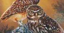 почтовые марки птиц