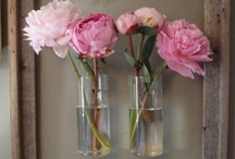 decor / by buttercup's sister