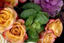 Flowers / by Elisabeth Meda