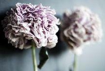 Flowers (bloemen)