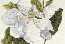 Botanicals / by Elisabeth Meda