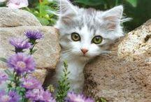Alexa's Cat's / by Judy Whitehead