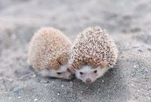 Cute / Animals that always makes me smile and say awwww :3