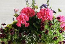 Green Thumb / plants, flowers, etc.