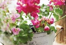 Garden Inspiration / by Tammy Merrill