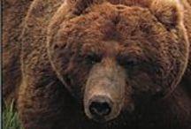 Living Alaska / All things related to living the Alaskan adventure!