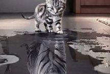 Katzen - ob klein oder groß