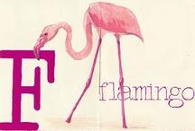 Flamingo / by Rachel Dye