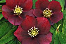 I love flowers / by Lindsay Decker